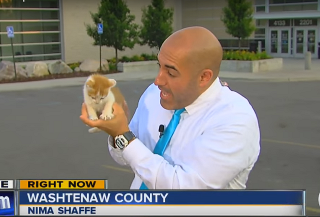Бездомный котенок внезапно стал героем прямого эфира