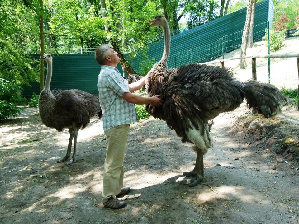 Биолог-консультант зоопарка в Межигорье веселит сети забавными фото местных животных