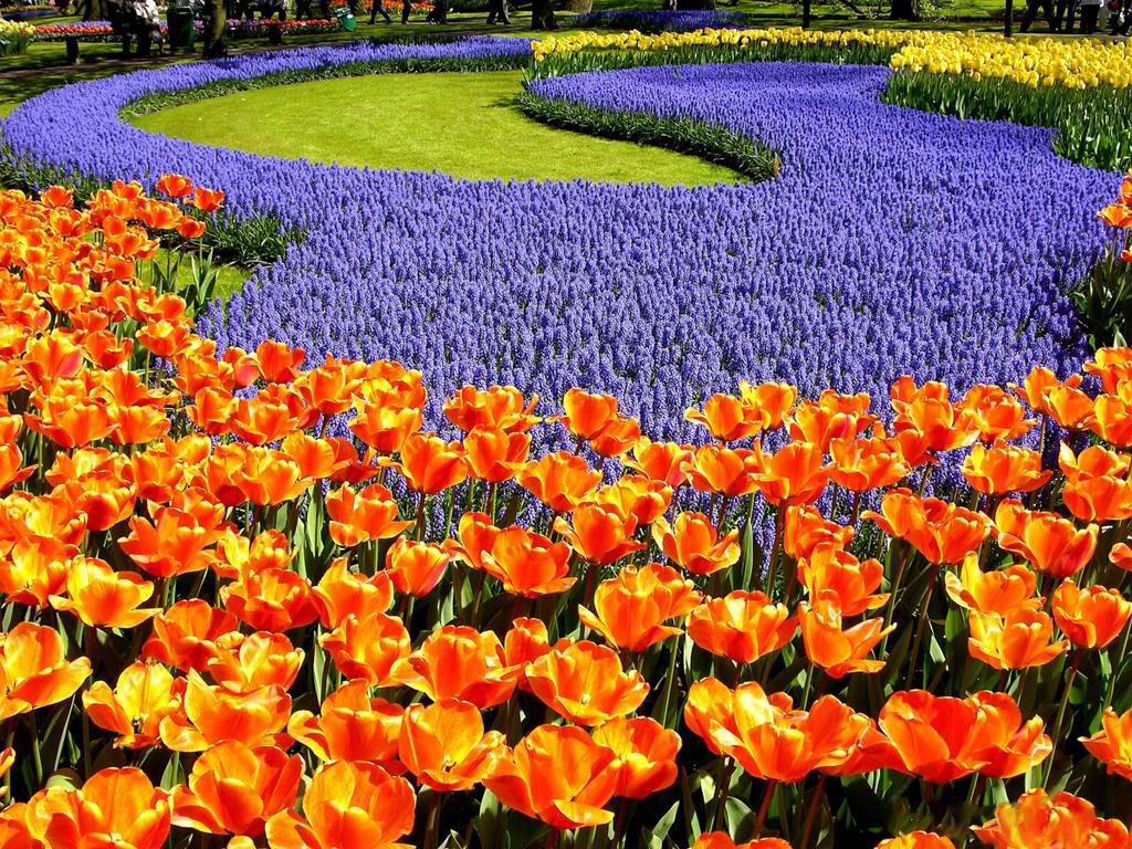 На Певческом поле проходит выставка тюльпанов